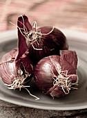 Rote Zwiebeln auf Teller