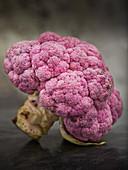 Organic Purple Cauliflour