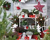 Weihnachtsterrasse mit geschmückten Eiben und Christrosen