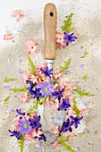 Blüten-Kollage aus Hyacinthus, Anemone blanda und Scilla 'Rosea'