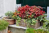 Herbstbepflanzung im Korbkasten, Nandina 'Firepower'