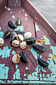 Raw clams and mussels on boat