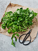 Water cress on a piece of paper with scissors