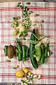 Gurkenvielfalt in vielen Formen und Größen