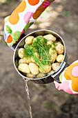 Wasser abgießen aus Topf mit gekochten Kartoffeln