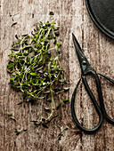 Thyme and scissors on wooden background