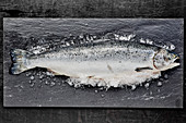Fresh fish on a slate board