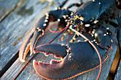 Fresh lobster on a wooden pier