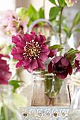 Gefüllte Christrosen-Blüte im Glas