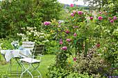 Kleine Sitzgruppe am Beet mit englischer Rose 'Gertrude Jekyll', Weigelie und Clematis