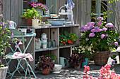 Sommer-Terrasse mit Hortensie, Salat, Petunie 'French Vanilla', Kapuzinerkresse, Petersilie und Zauberglöckchen