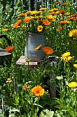 Ländlicher Strauß aus Ringelblumen im Garten