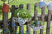 Suppentassen als Osterdekoration am Zaun, gefüllt mit Kresse und Ostereiern