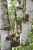Korb für hängende Dekoration aus Weidenzweigen selbermachen: Strauß aus Apfelblüten im Korb an Birke gehängt