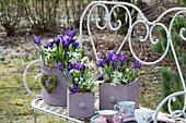 Frühling auf Bank im Garten mit Krokus und Milchstern, Moosherz