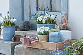 Frühlingsdeko mit Hornveilchen und Traubenhyazinthen, Topf mit Samentüten