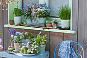 Osterdeko am Fenster: Vergißmeinnicht in drei Farben, Schnittlauch, Petersilie, Hornveilchen 'Sorbet Marina', Gänseblümchen, Rucola und Hyazinthen