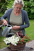 Frau bepflanzt Korb mit Zauberglöckchen und Purpurglöckchen und gießt