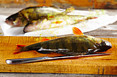 Perch on a wooden board with dill and a knife