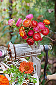 Autumn arrangement of zinnias and everlasting flowers in old mincer