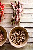 Freshly harvested beans variety