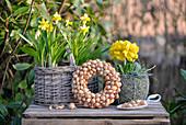 Kranz aus Steckzwiebeln, dekoriert mit Narzissen und Primeln auf einer alten Weinkiste