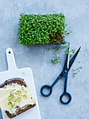 Scissors, cress and sandwich, studio shot
