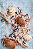 Seafood against grey background