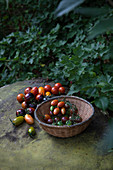Freshly picked different shape and color tomatoes in a pleated basket outdoor