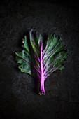 Ein violettstieliges Kohlblatt auf dunklem Untergrund
