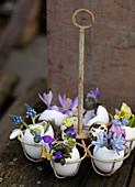 Alter Eierhalter mit Frühlingsblumen in Eierschalen als Väschen