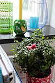 Zimmerpflanze mit Vogelfigur und Kerzenhalter und Laterne auf Ablage