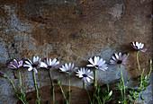 Weisse Blumen in einer Reihe auf rostigem Untergrund