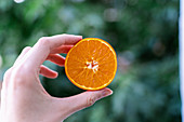 Crop female hand holding ripe orange tangerine on blurred background of garden