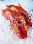 Red mullet on ice