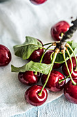 A branch with ripe cherries