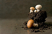 An arrangement of earth with white and brown mushrooms
