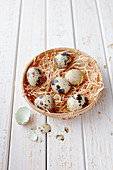 Quail eggs in a basket with straw