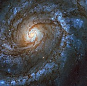 Messier 100 spiral galaxy,Hubble image