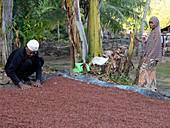 Clove crop,Indonesia