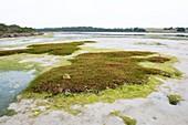 Salt marsh at low tide in an estuary