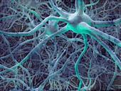 Neural network,illustration
