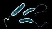 Ideonella plastic-degrading bacteria,illustration