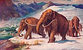 The early Ice Age, 1907
