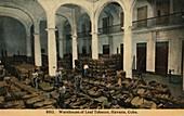 Warehouse of Leaf Tobacco, Havana, Cuba, c1910