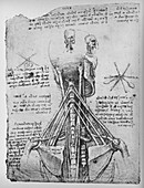 Study of the Back View of a Skeleton, c1480