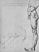 Study of the Lower Half of a Man and of Machinery, c1480