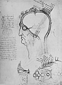 Sections of a Man's Head Showing the Anatomy', c1480