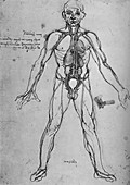 Man Drawn as an Anatomical Figure, c1480