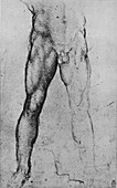 Study of the Lower Half of a Nude Man, c1480